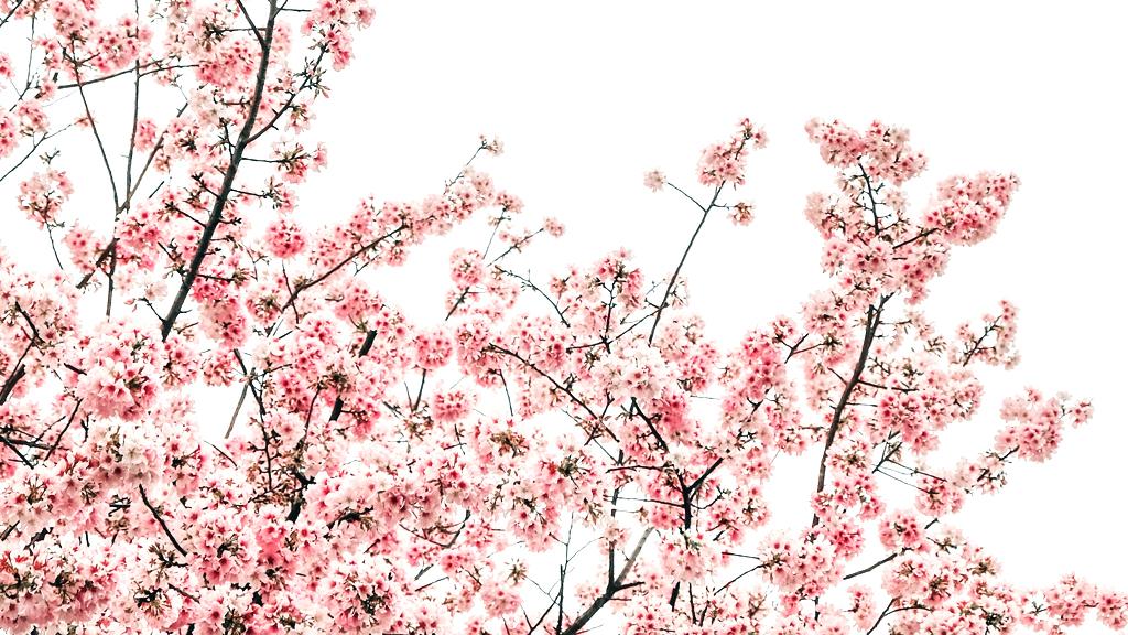 そして季節は春