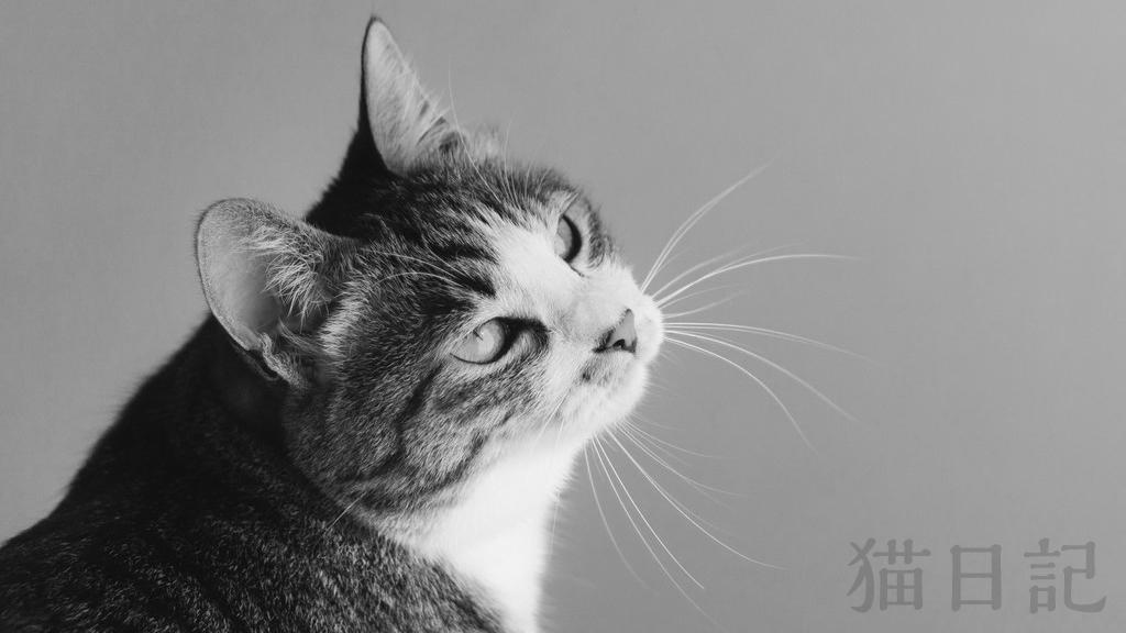 2006年の猫日記