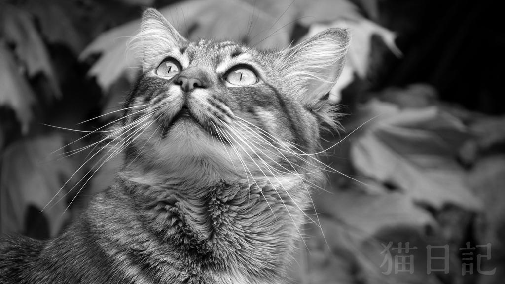 2011年の猫日記